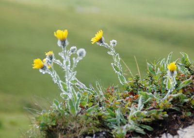 Blumenwiese7
