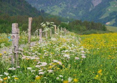 Blumenwiese9